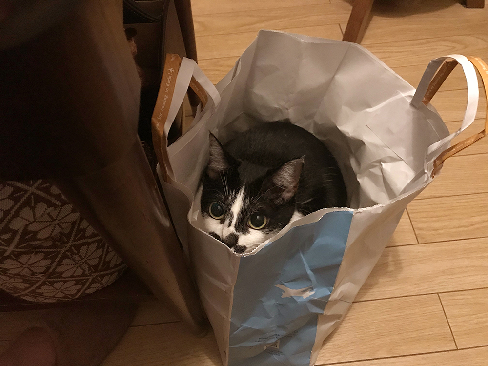 抱っこが嫌いな猫。紙袋があれば抱っこも可能