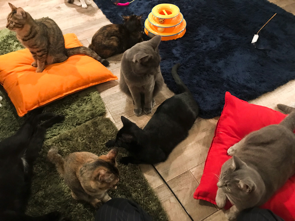 田園都市線駒沢大学駅にある保護猫カフェ「駒猫」へ