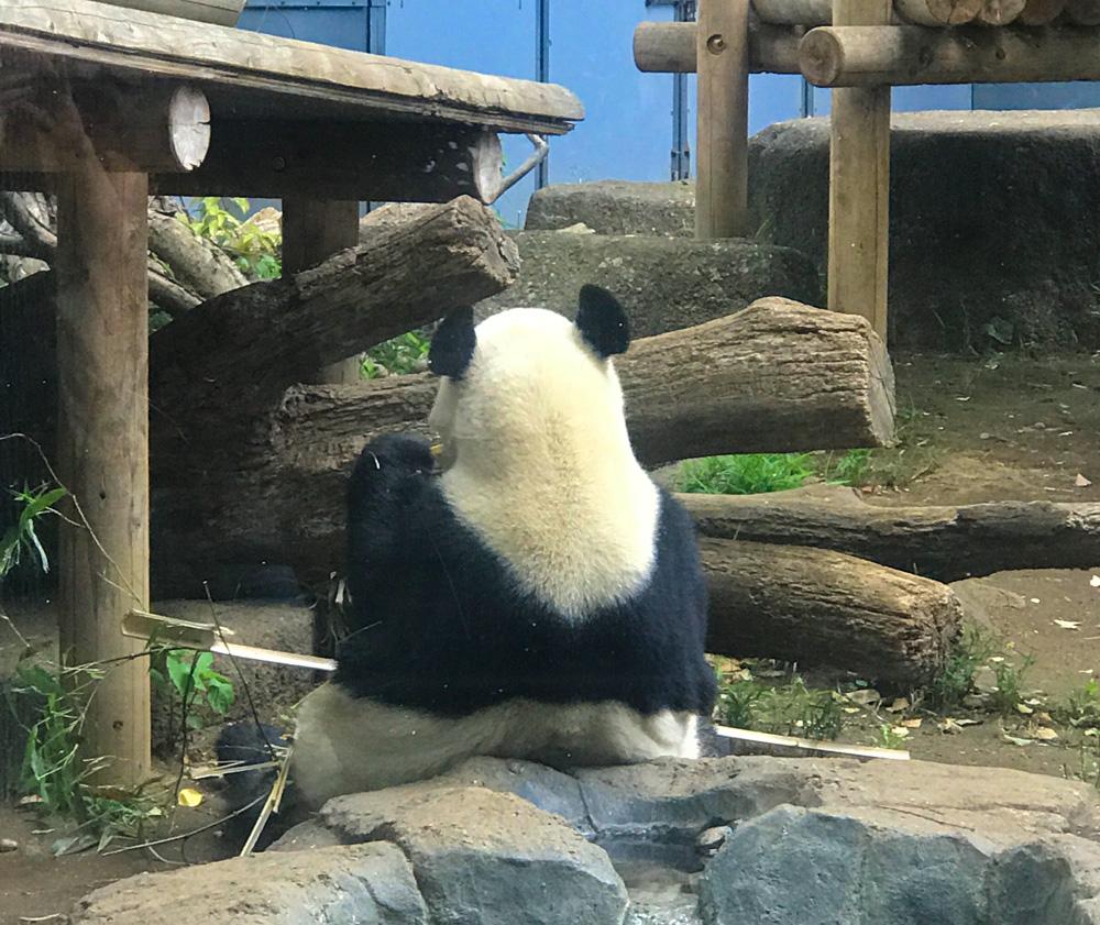 恒久の愛くるしさを誇るパンダ