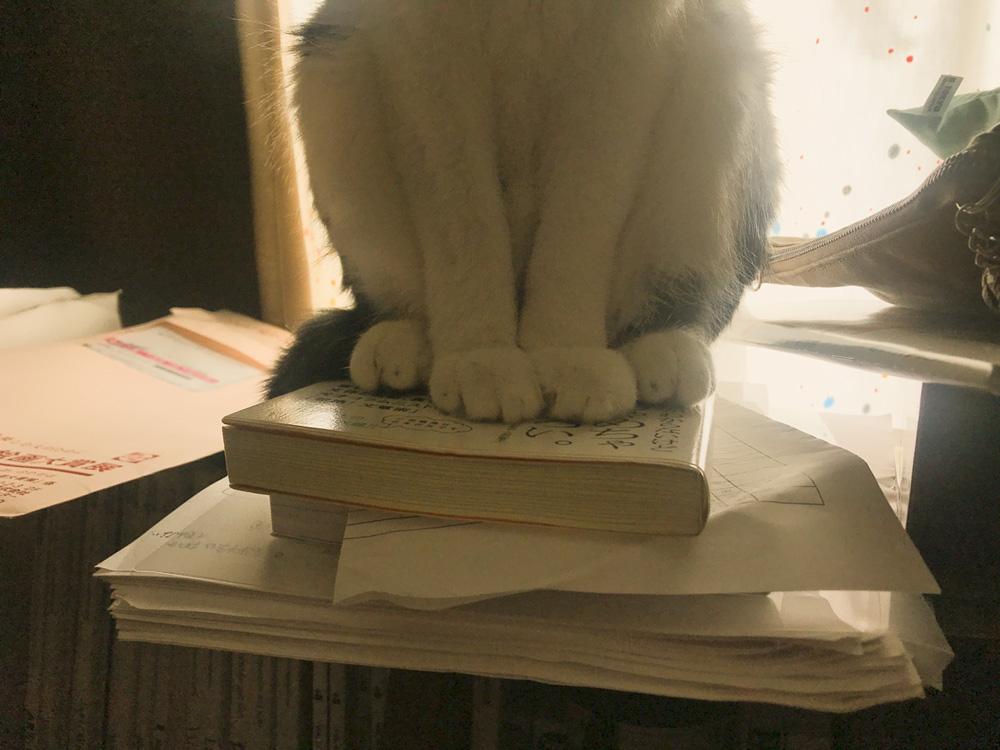 積み重なった本に鎮座する猫