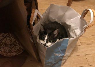 抱っこ嫌いの猫が、紙袋に入っていれば抱っこさせてくれる。しかし、この紙1枚がもどかしい。それが彼女のA.T.フィールド